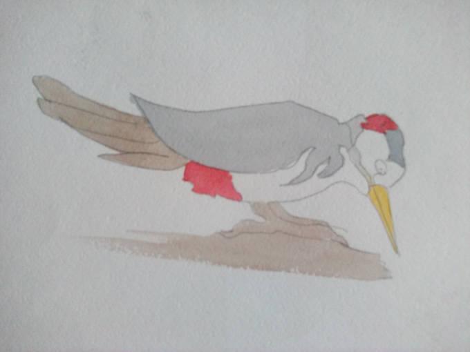 как рисовать дятла изображение цветом